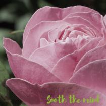 Properties of rose essential oil