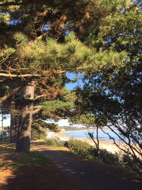 Cedar Tree New Forest