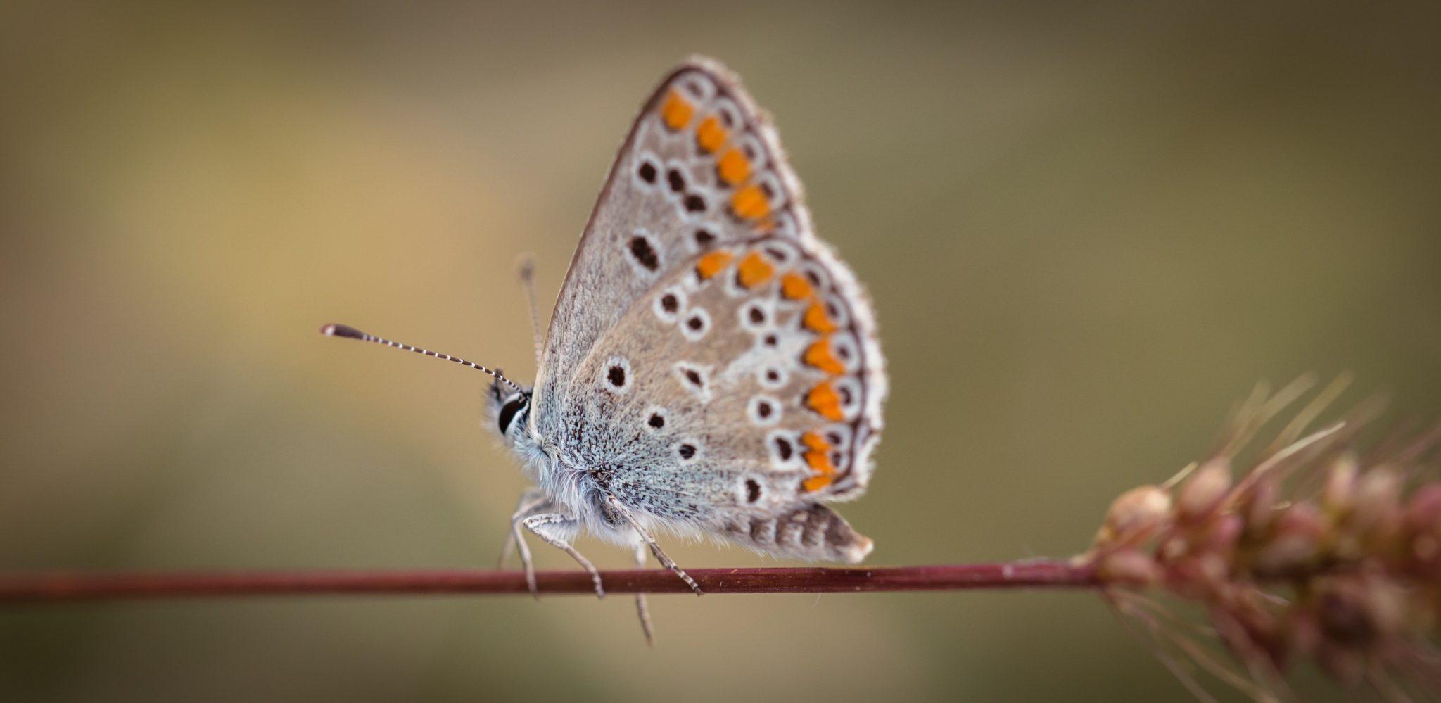 Moth repellant