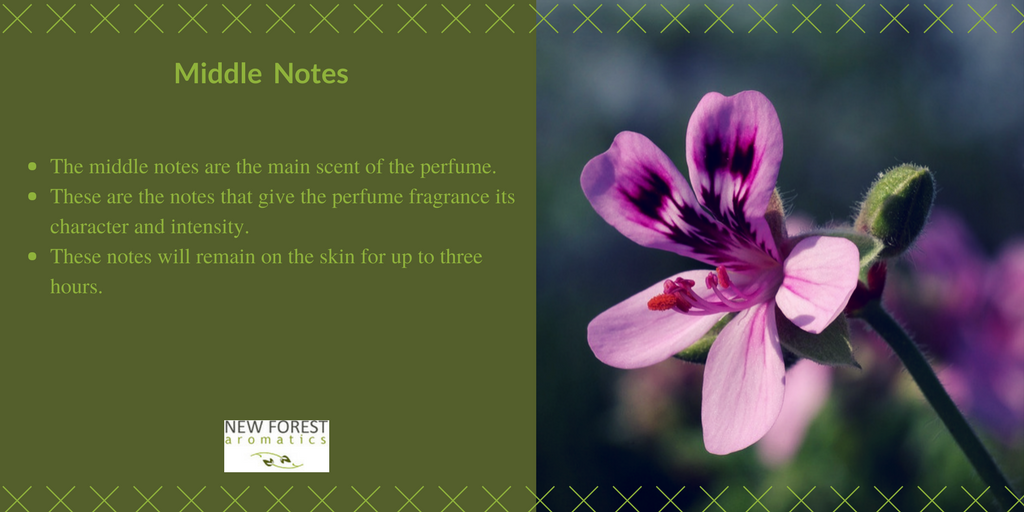 Middle notes of perfume fragrance
