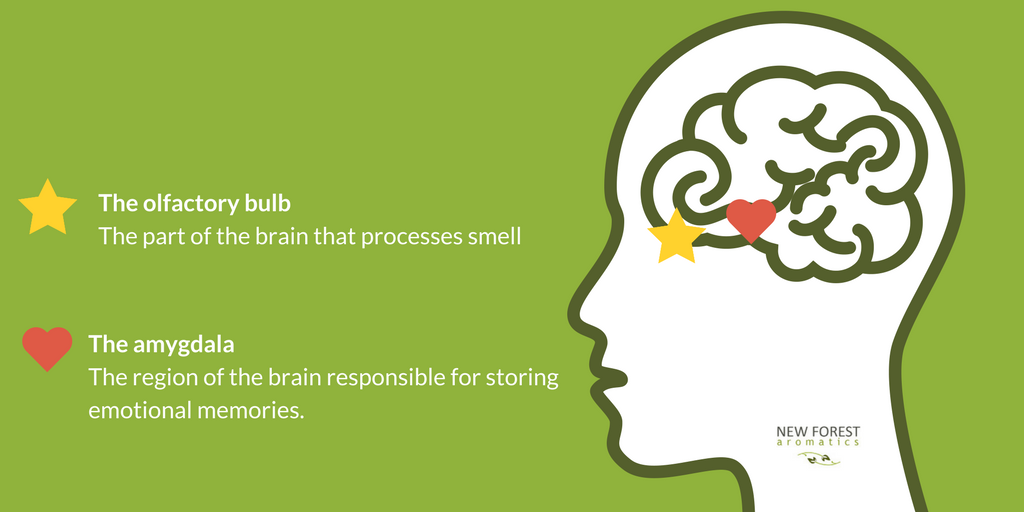 Smell is linked to memory